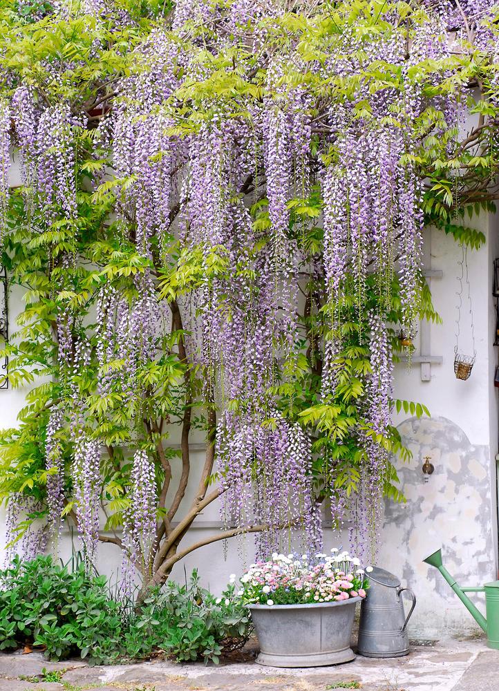 Магазин цветов глициния, невесты флорист